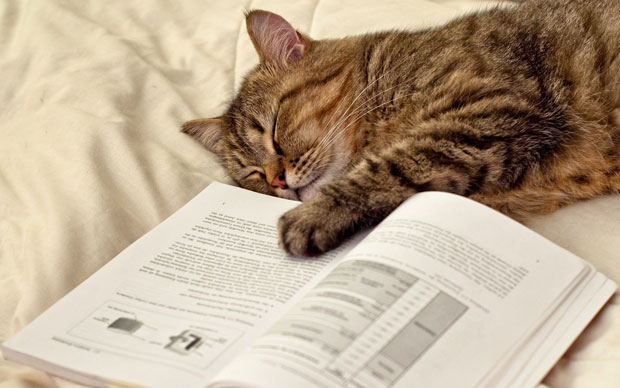 sleeping-bookcat-620